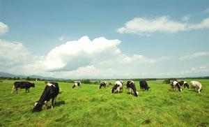 放牧牛乳のおいしさを、もっと多くの人へ