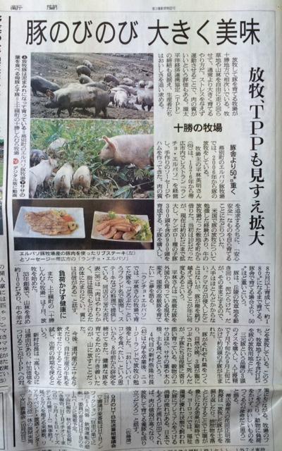 150925朝日新聞放牧豚